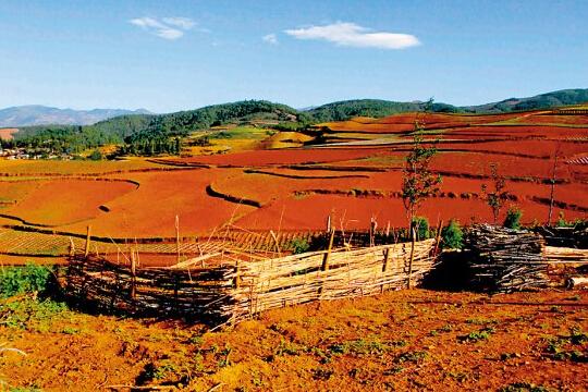 六月出游好时节,就让我们一起旅行来见证最美的土地。 大自然的色彩诱惑:云南东川    六月之美:云贵高原上有一片如彩虹般绚烂的土地,远眺之,似乎是被天地塌陷后的熊熊天火猛烈地燃烧过,呈现出一种极致的艳丽色彩,无法用言语形容的美丽。这就是云南东川的红土地。   这里已经成为摄影发烧友捕捉最美镜头的摄影胜地,层层叠叠的梯田里,火红的土壤上,一年四季洋麦花、荞子花、土豆花、油菜花和萝卜花交替开放,色彩斑斓,鲜艳浓烈的色块一直铺到云里、雾里、天边,还有驴友们的心中。   出游小贴士   食宿:当地建了许多家庭式旅