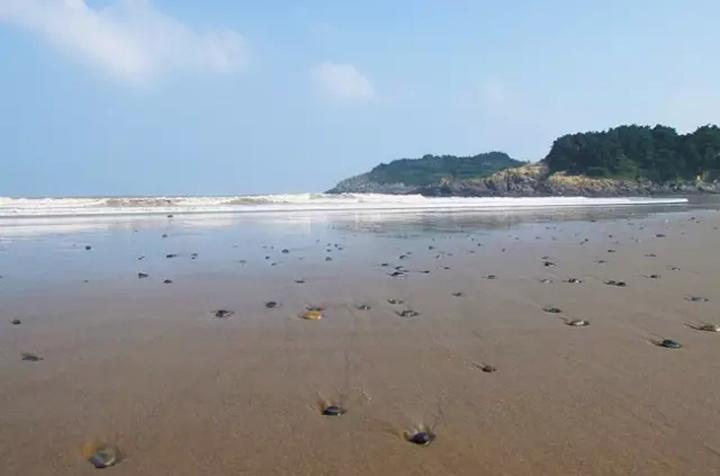 3   位于内九龙山风景区,背依青山,南面大海,三面环山,形似新月,沙滩