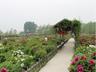 第七届北京琉璃河牡丹文化节