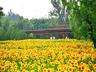 百亩葵花展,一个月免费观赏!